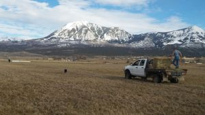 feeding cattle views Mt. Lamborn